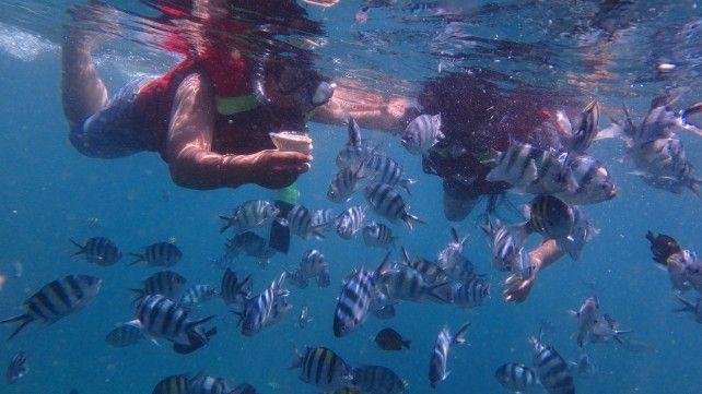Bali Marine Activities - Serangan Island