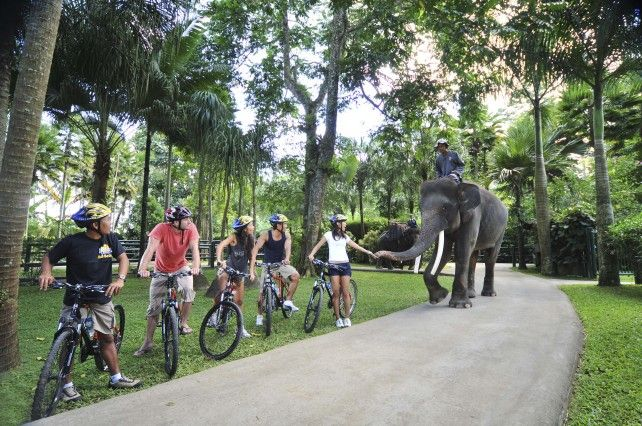 Bali Mountain Cycling and Lunch with the Elephants (C)