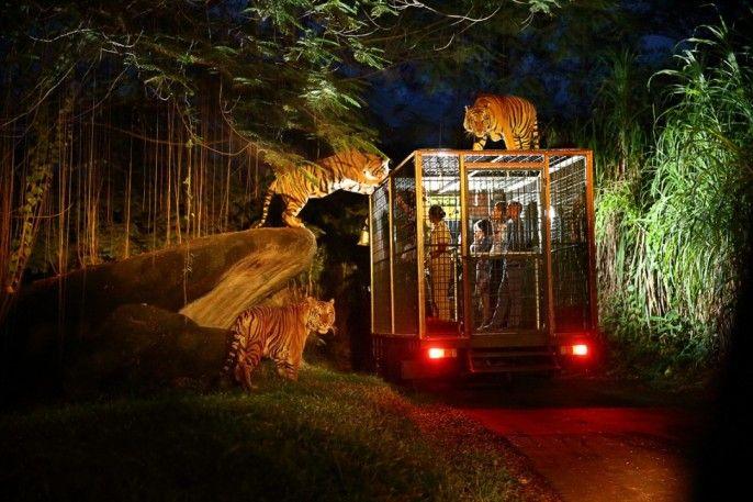 harga tiket Bali Night Safari - Indonesia Citizen Promo