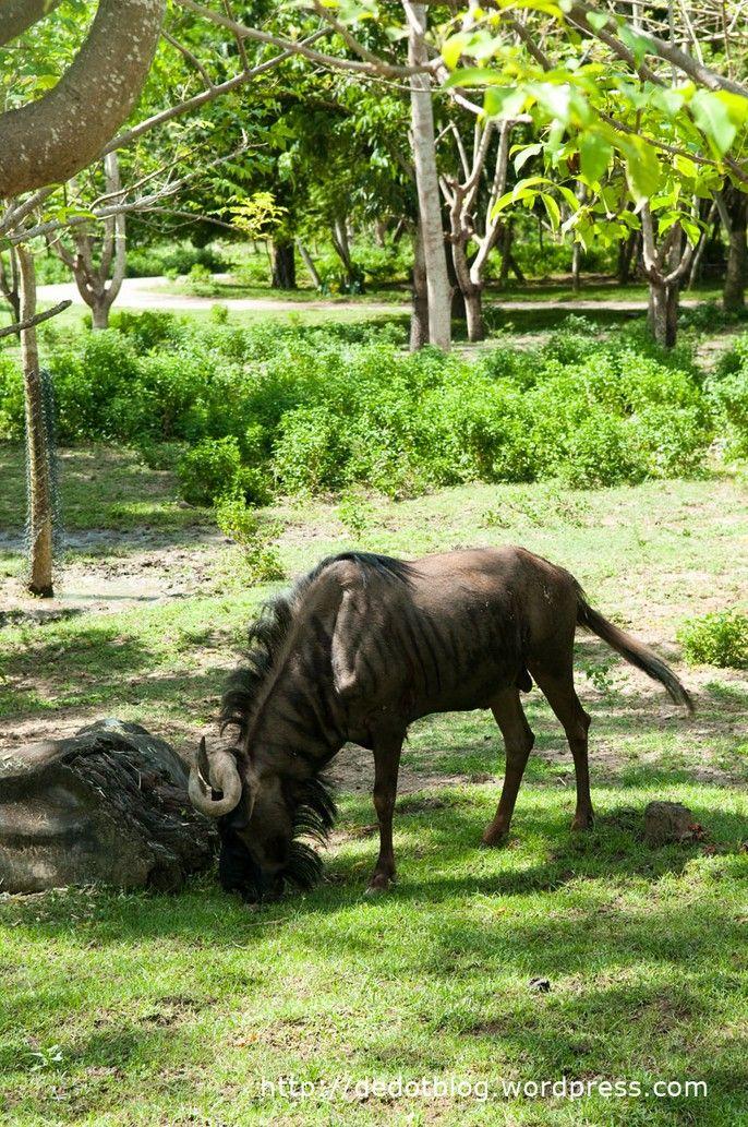 Bali Safari & Marine Park