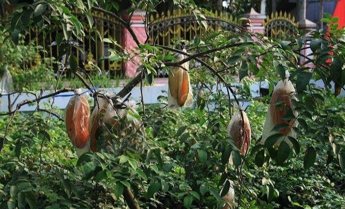 Desa Wisata Karangsari Blitar