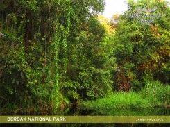 Taman Nasional Berbak