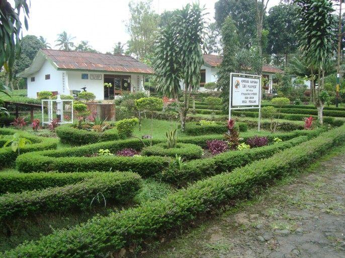 Agro Wisata Kebun Teh Semugih