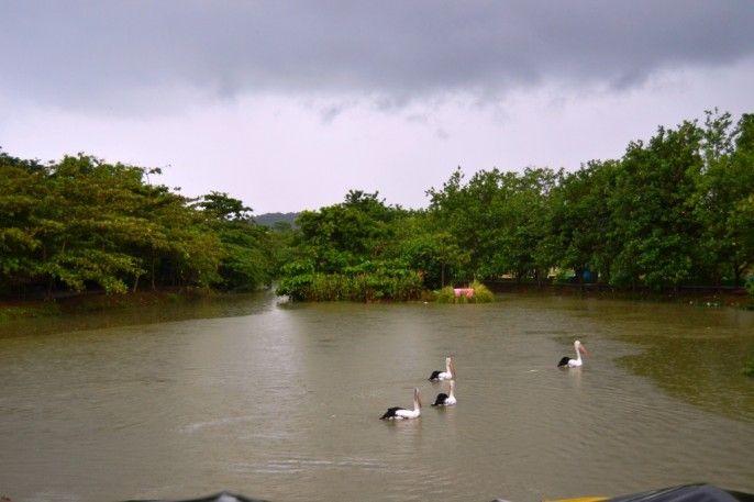 Bonbin Semarang