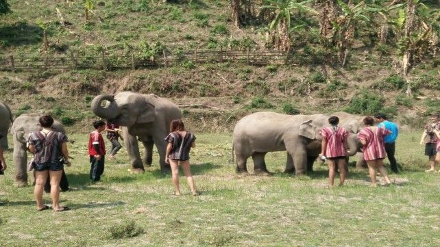 Elephant Sanctuary Jungle Tour