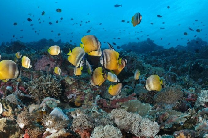 harga tiket Full-day Guided Scuba Diving Experience in Tulamben with Transfer