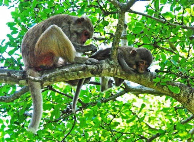 Full-day Tour to Monkey Island with Seafood Lunch