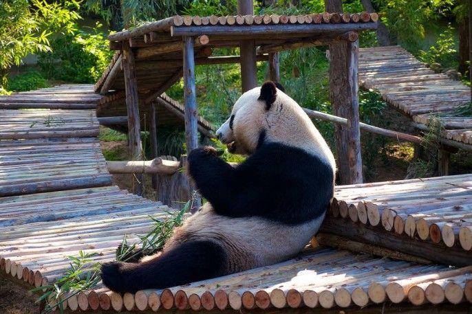 harga tiket Half-day Guided National Zoo Malaysia Tour