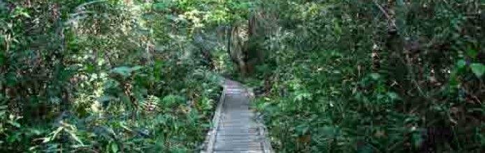 Hutan Kota Mayang Mangurai
