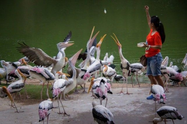 Khao Kheow Open Zoo Pattaya - Admission Only (Worldwide Markets Except Thai)