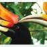 Kuala Lumpur Bird Park, Butterfly Park and Orchid Garden Tour