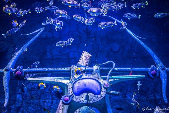 Lost Chambers Aquarium Ticket