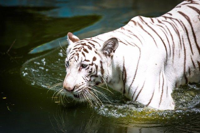 National Zoo Malaysia Admission (Non-Asean)