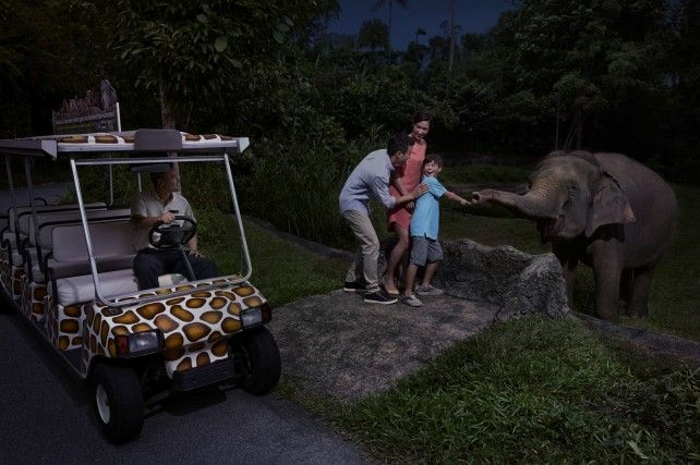 Night Safari: Fixed Date Admission with Multilingual Tram Ride