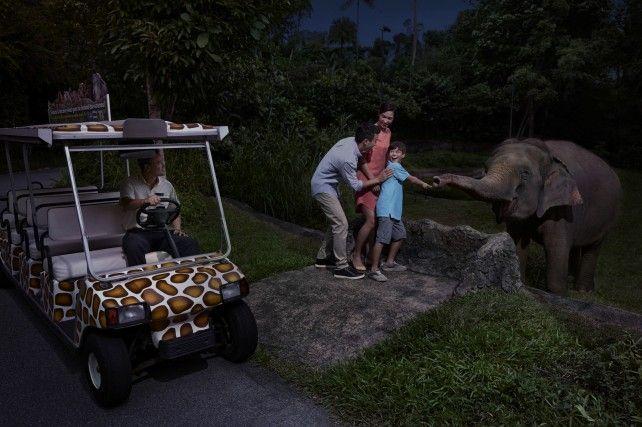 Night Safari: Fixed Date Admission with Multilingual Tram Ride