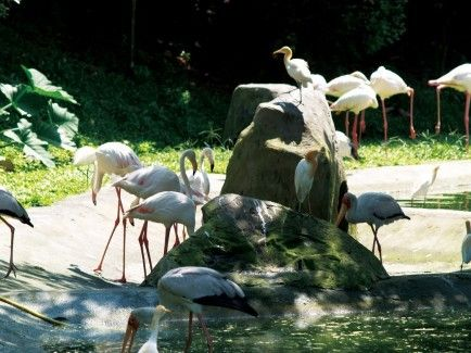 harga tiket Orchid Garden, Butterfly Park and KL Bird Park Tour