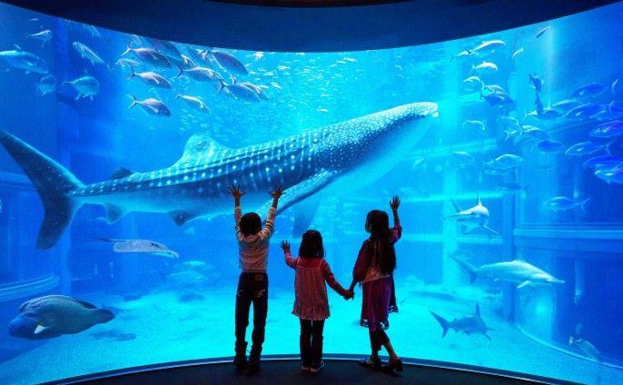 harga tiket Osaka Aquarium KAIYUKAN