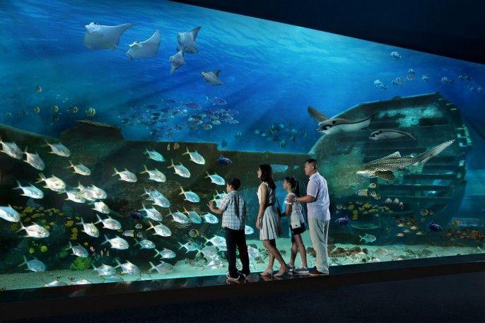 harga tiket S.E.A. Aquarium Admission with One-way Transfer