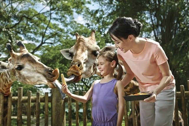 Singapore Zoo: Admission with Tram Rides
