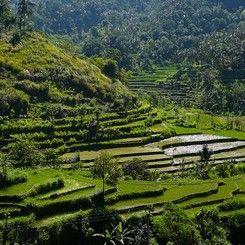Hotel dekat Tegallalang Bali