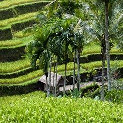 Hotel dekat Tegalalang Bali